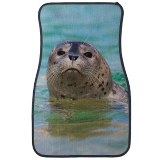Swimming with a baby seal car mat