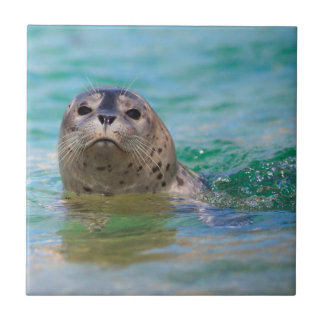 Swimming with a baby seal small square tile