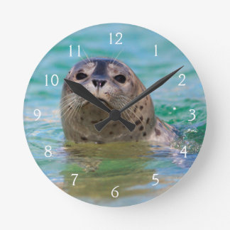 Swimming with a baby seal wall clock