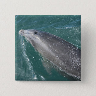 Swimming with dolphins and Dolphin Watch 15 Cm Square Badge