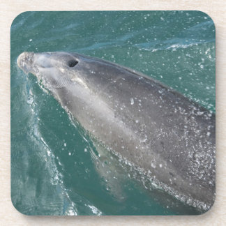 Swimming with dolphins and Dolphin Watch Coaster