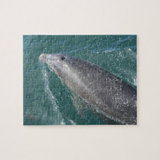 Swimming with dolphins and Dolphin Watch Jigsaw Puzzle