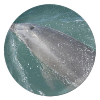 Swimming with dolphins and Dolphin Watch Plate