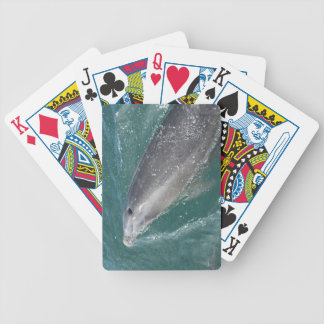 Swimming with dolphins and Dolphin Watch Poker Deck