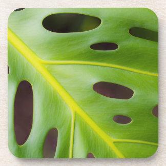 Swiss Cheese Plant Plastic Coasters (set of 6)