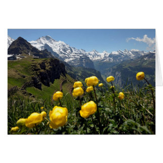 Swiss Greetings cards, Grindelwald, yellow flowers Card