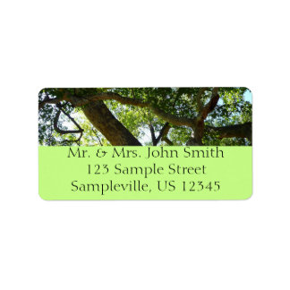 Sycamore Tree Green Nature Photography Address Label