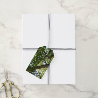 Sycamore Tree Green Nature Photography Gift Tags