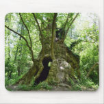 Sycamore Tree Home Mouse Pad