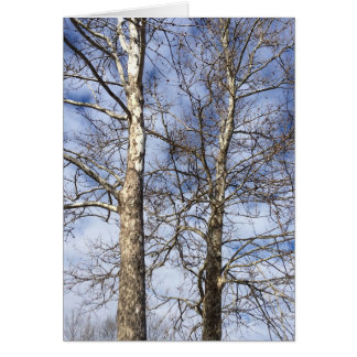 Sycamore Trees in a Winter Sky. Greeting Card