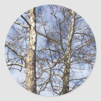 Sycamore Trees in a Winter Sky --- Round Sticker