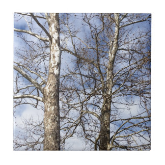 Sycamore Trees in a Winter Sky --- Small Square Tile