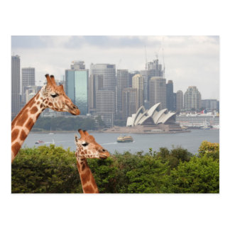 Sydney Giraffe Postcard