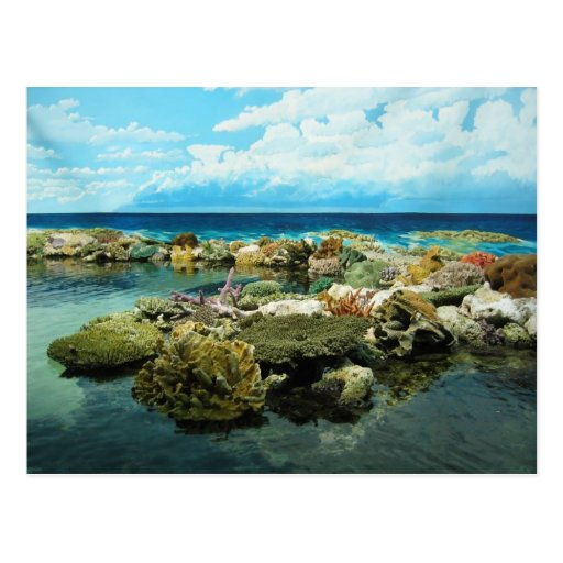 Sydney Great Barrier Reef Post Cards