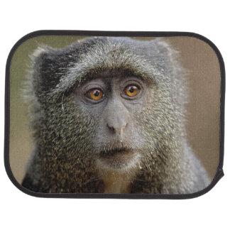 Sykes or Blue Monkey, Cercopithecus mitis, Car Mat