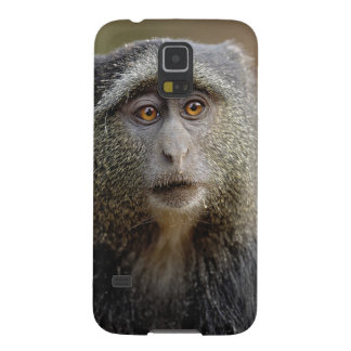 Sykes or Blue Monkey, Cercopithecus mitis, Cases For Galaxy S5