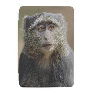 Sykes or Blue Monkey, Cercopithecus mitis, iPad Mini Cover