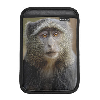Sykes or Blue Monkey, Cercopithecus mitis, iPad Mini Sleeve