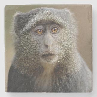 Sykes or Blue Monkey, Cercopithecus mitis, Stone Coaster