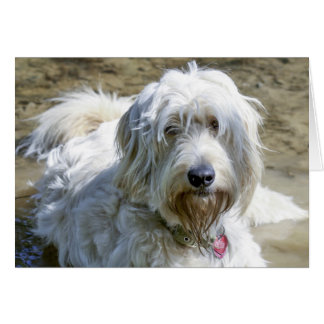 Sympathetic dogs help ease the pain over pet loss card