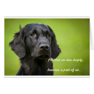 Sympathy card features Flatcoat Retriever