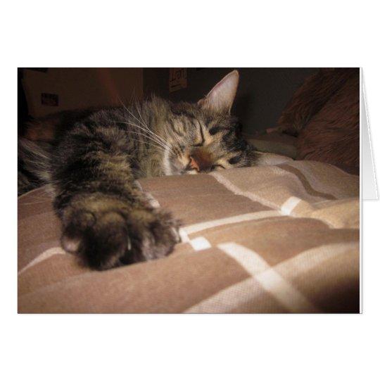 Sympathy - Cat Card