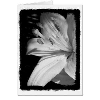 Sympathy Lily Card