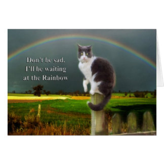 Sympathy - Loss of Pet  Cat Greeting Card