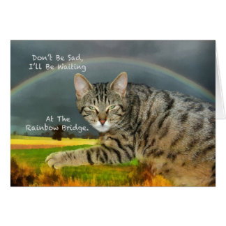 Sympathy - Loss of Pet Tabby Cat Card