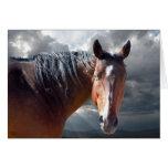 Sympathy Support & Comfort - Horse Lover