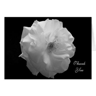 Sympathy Thank You Card -- White Rose