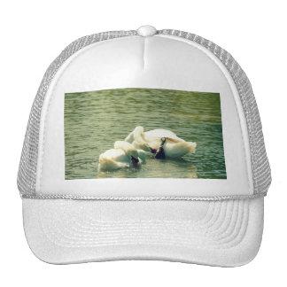 Synchronized Swan Bath Trucker Hats