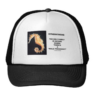 Syngnathidae Only Family In Nature Male Pregnancy Hat