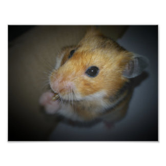 Syrian Hamster Poster