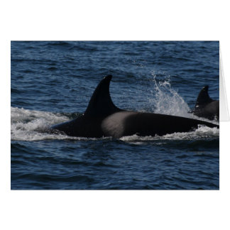 T00 / Transient Killer Whale Greeting Card