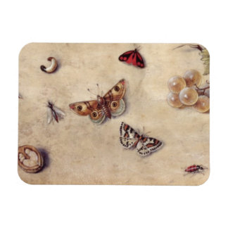 T31566 A Study of Various Insects, Fruit and Anima Rectangular Photo Magnet