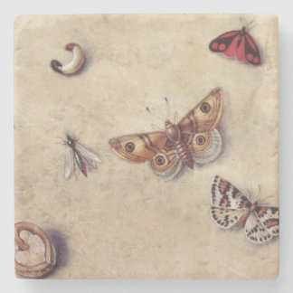 T31566 A Study of Various Insects, Fruit and Anima Stone Coaster