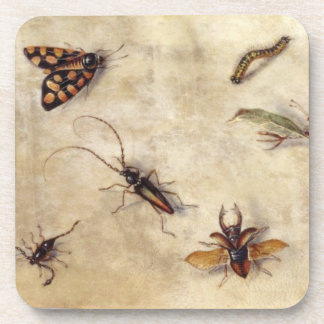 T31567 A Study of Various Insects, Fruit and Anima Drink Coaster