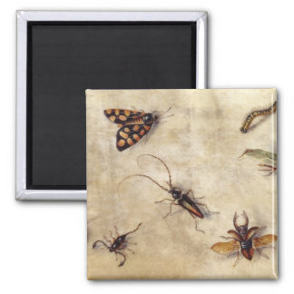 T31567 A Study of Various Insects, Fruit and Anima Square Magnet