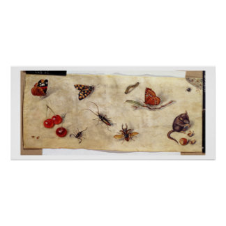 T31567 A Study of Various Insects, Fruit and Anima Poster