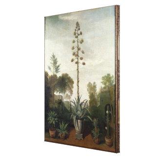 T33047 A Botanical Garden Canvas Print