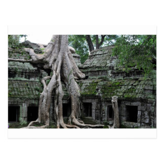 ta prohm temple  in cambodia post cards