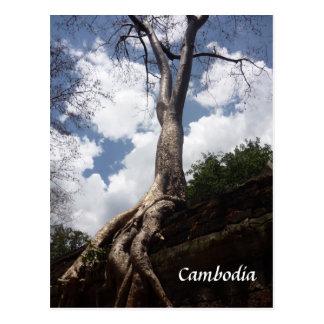 ta prohm tree root postcards