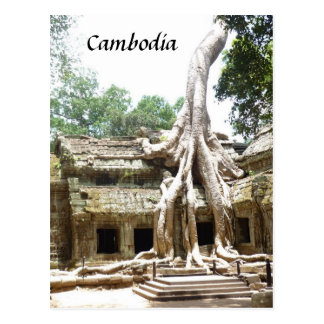 ta prohm tree roots postcard