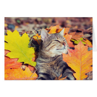 Tabby Basking in the Foliage Card