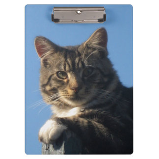 Tabby Cat - Clipboard