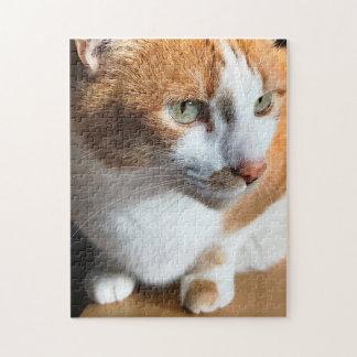 Tabby cat closeup jigsaw puzzle