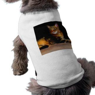 Tabby cat dog shirt