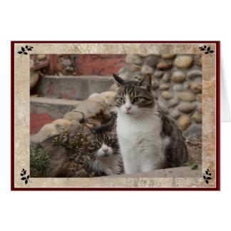 Tabby Cat Friends Card