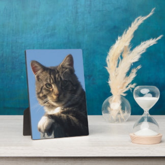 Tabby Cat Image - Photo Plaque & Easel